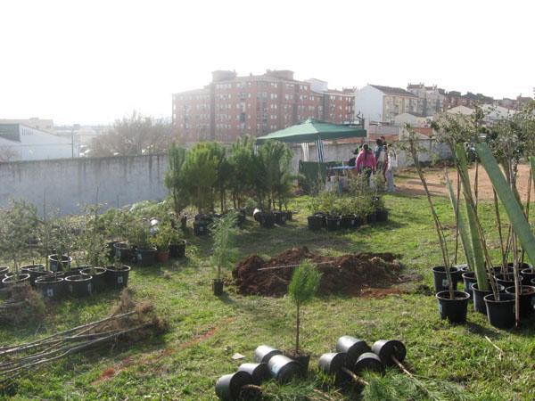 Arboles para plantar